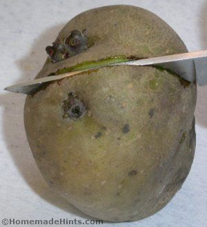 cut seed potato