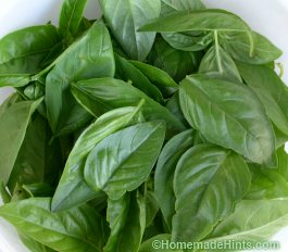 fresh basil leaves for pesto