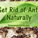 Get rid of ants with natural, homemade ant killer recipes.