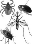 homemade mosquito repellent against variety of insects