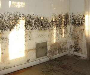 mold on walls and paint