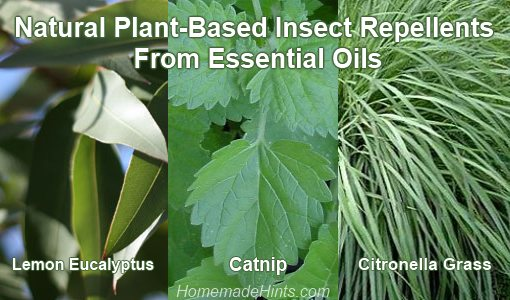 natural insect repellent from plant essential oils