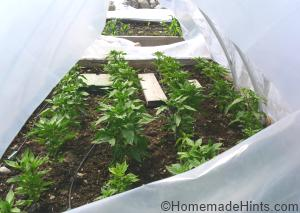 plastic greenhouse design