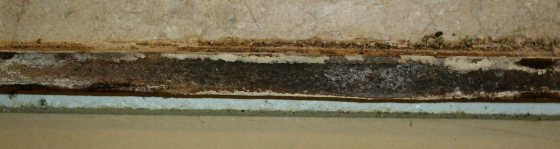 how to remove black mold from house sink